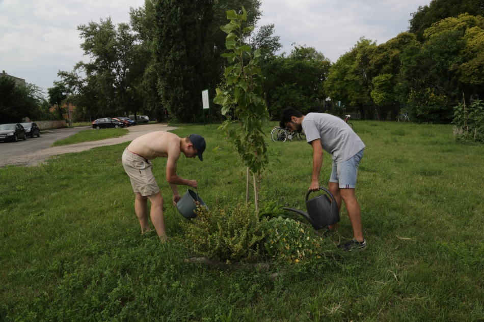 The French interns watering the agroforest